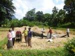 champ de riz sri lanka domidora