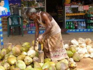 coupeur noix de coco sri lanka domidora